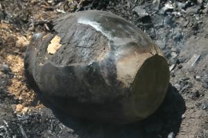 p, potten oogst,2010, 7