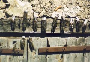7, 20ste eeuw, Frankrijk, (bij)geloof, dode geitenhoefjes, tegen ziekte