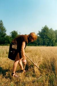 P, landbouw, oogsten van graan met zicht en pikkel