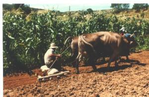 landbouw, eggen in de ijzertijd 1991 001